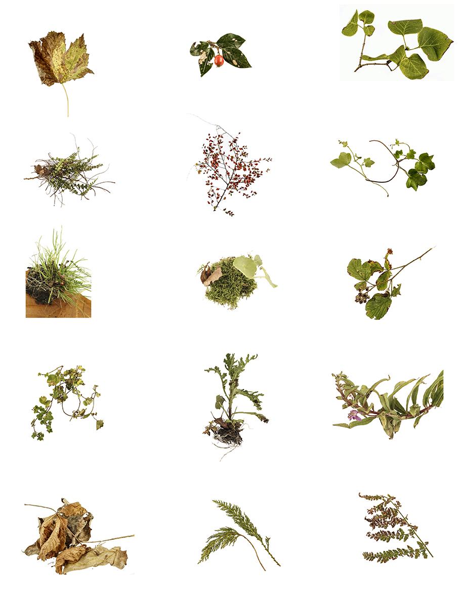 October specimens 15  72dpi .jpg