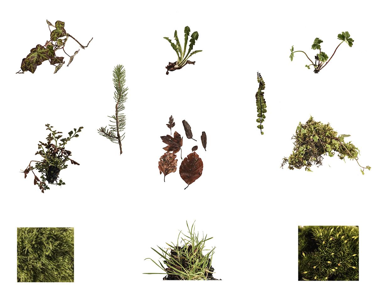 Winter specimens 72 dpi .jpg