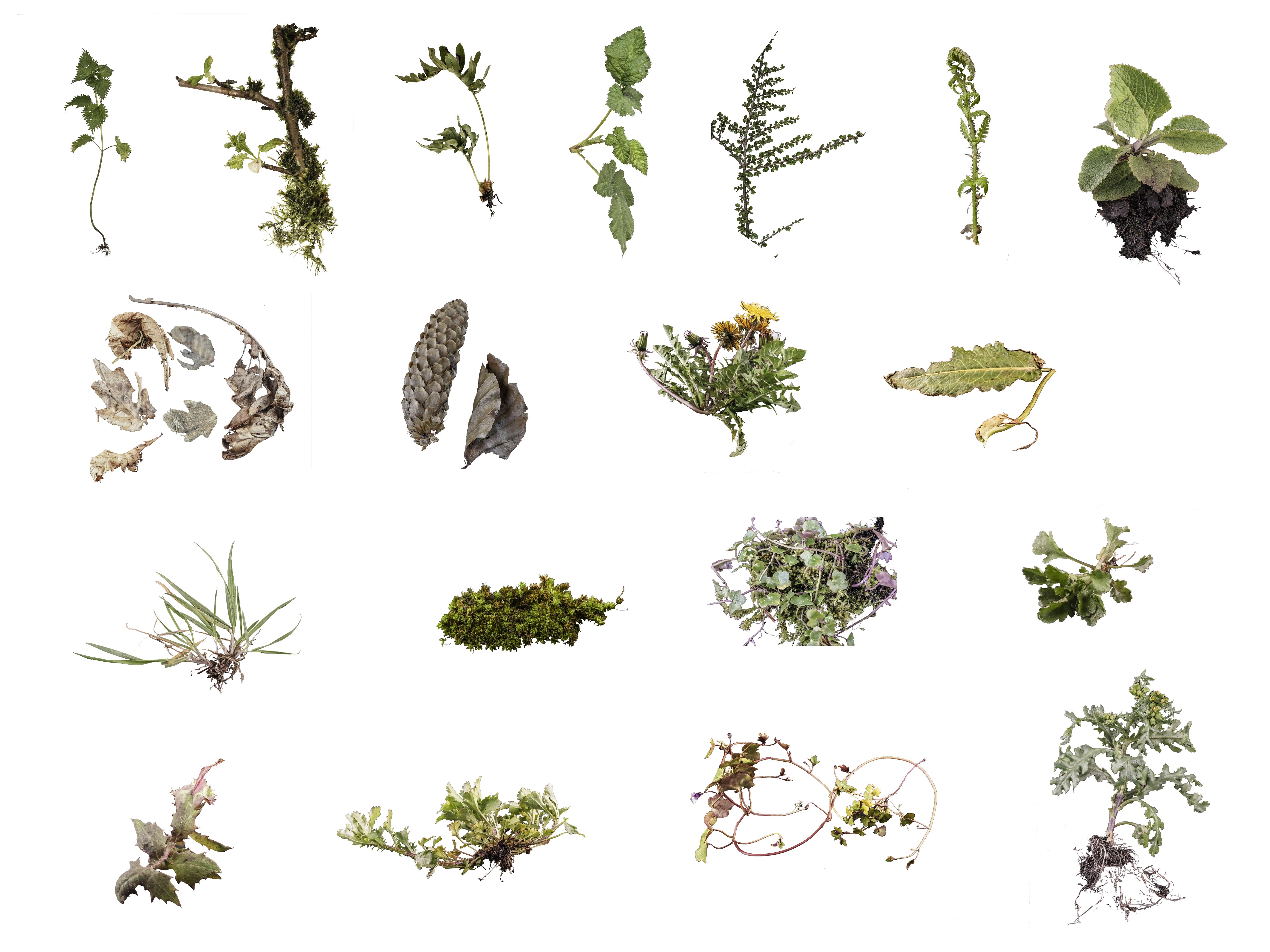 April botanicals .jpg