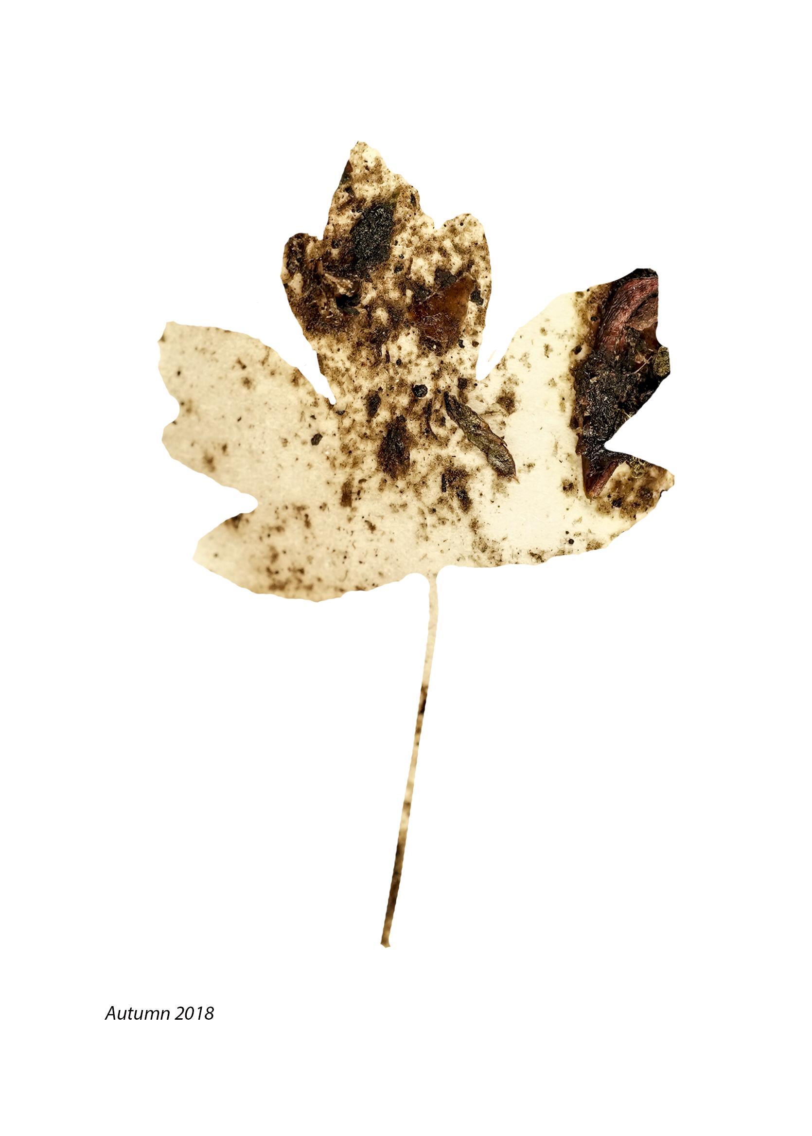 Autumn mix leaf .png