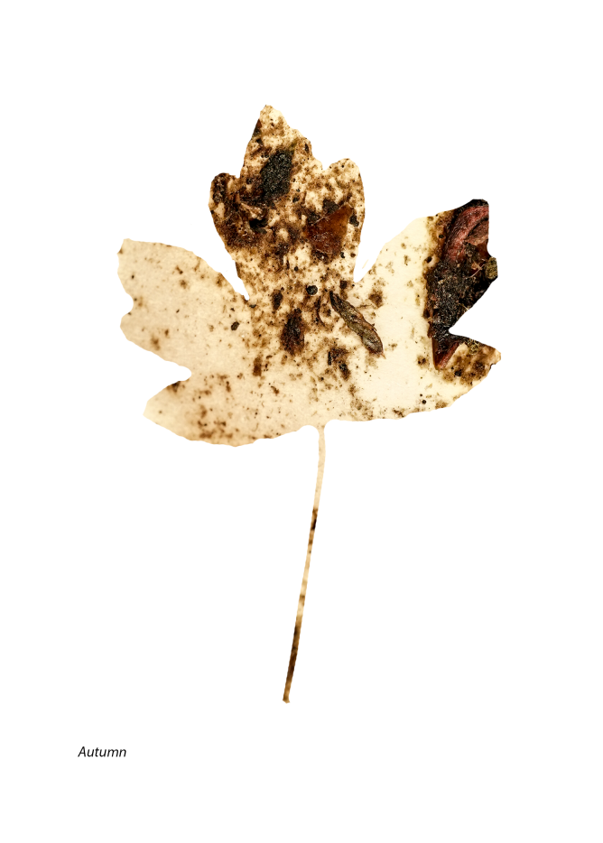 Autumn mix leaf .png