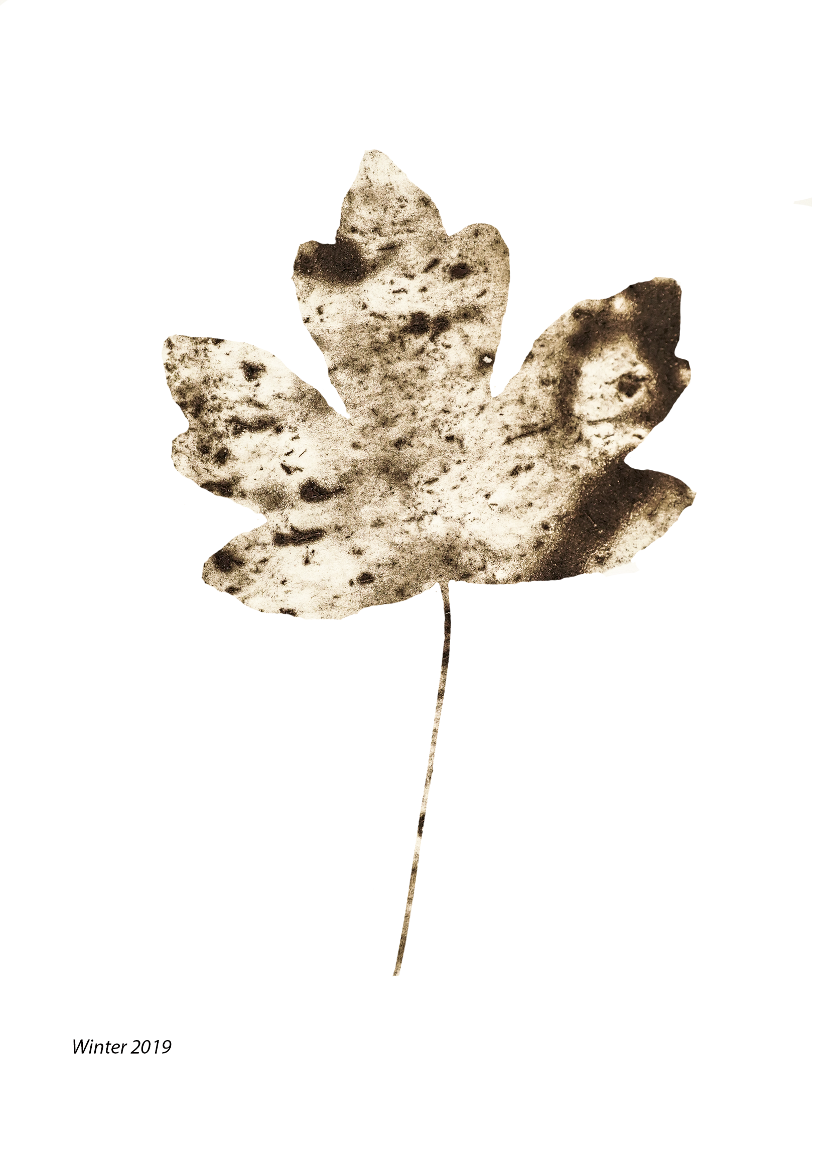 Winter mix leaf .png